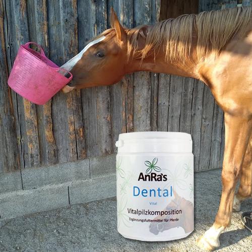 anra-dental-vital-pferd-dose
