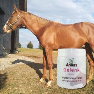 anra-gelenk-aktivator-dose-pferd