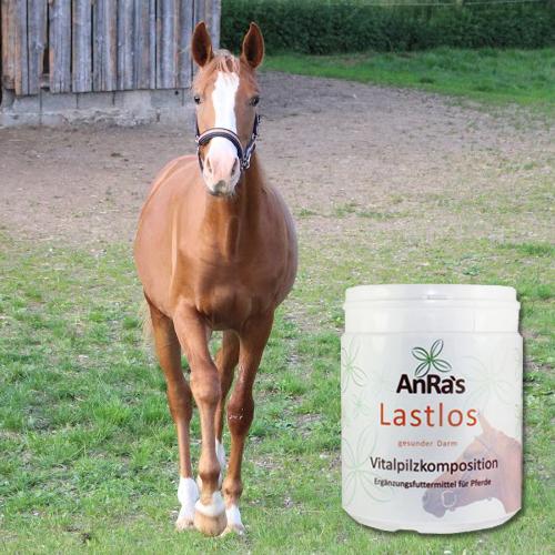 anra-lastlos-gesunder-darm-pferd-dose