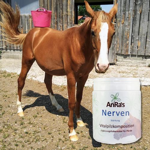 anra-nervenstaerkung-dose-pferd