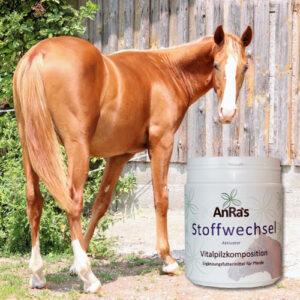 anra-stoffwechsel-aktivator-dose-pferd