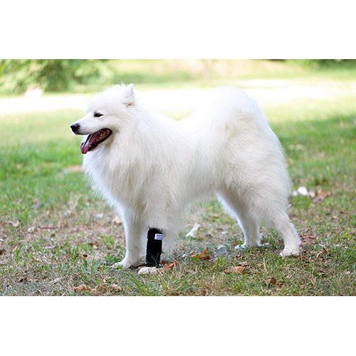 nature-pet premium bandage medium hund equisio shop